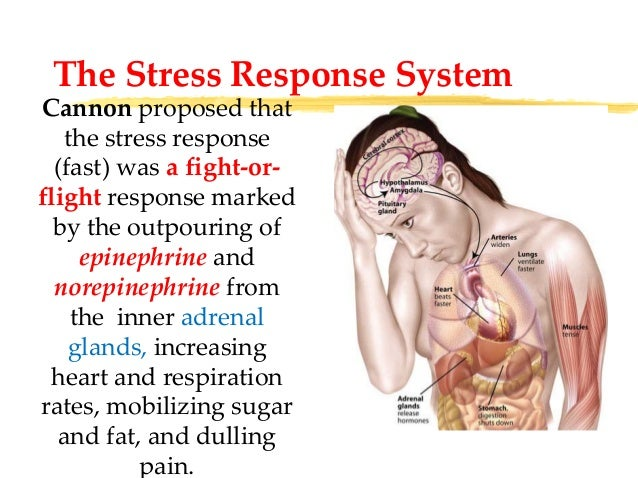 informative essay on stress Stress is an inevitable part of our life even people with positive thinking sometimes meet it learn about this phenomenon in our essay example.
