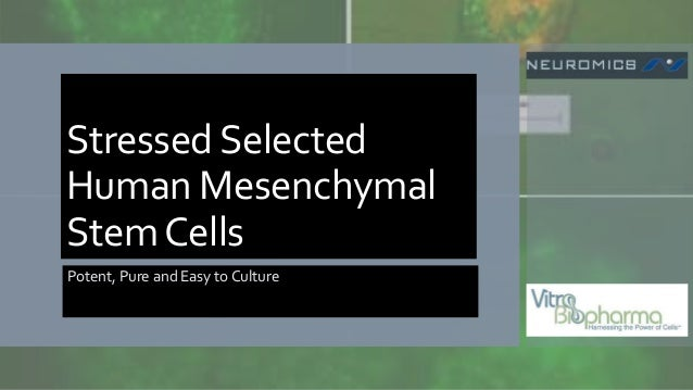 StressedSelected Human Mesenchymal StemCells Potent, Pure and Easy to Culture
