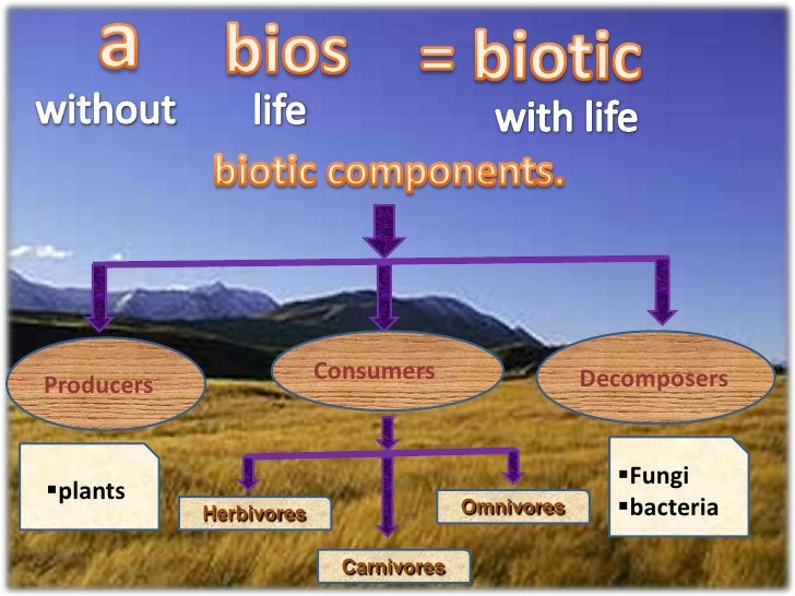 explain biophysical interactions which lead to diverse ecosystems functioning View sample answers for geography in band 4/5 at least one ecosystem you have studied, explain the biophysical interactions that lead to diverse ecosystems and.