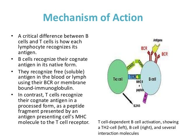 differences between the cells of different