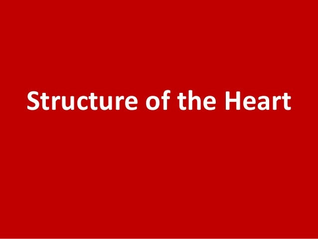 Structure of the Heart