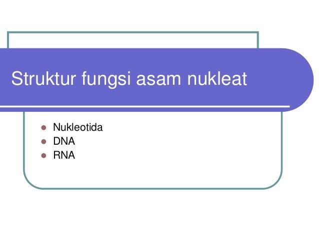 Struktur fungsi asam nukleat    Nukleotida    DNA    RNA