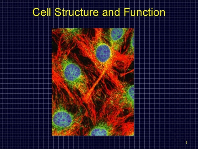 Cell Structure and Function  1