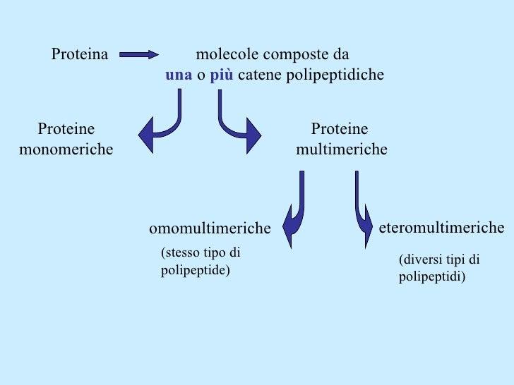 Proteina molecole composte da  una   o  più  catene polipeptidiche Proteine monomeriche Proteine  multimeriche omomultimer...