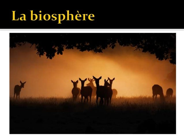1. Richesse spécifique :  Nombre total d'espèces différentes. 2. Abondance relative :  Pourcentage de la population tota...