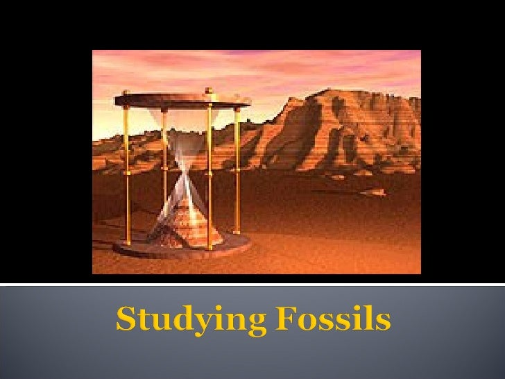 Studying Fossils
