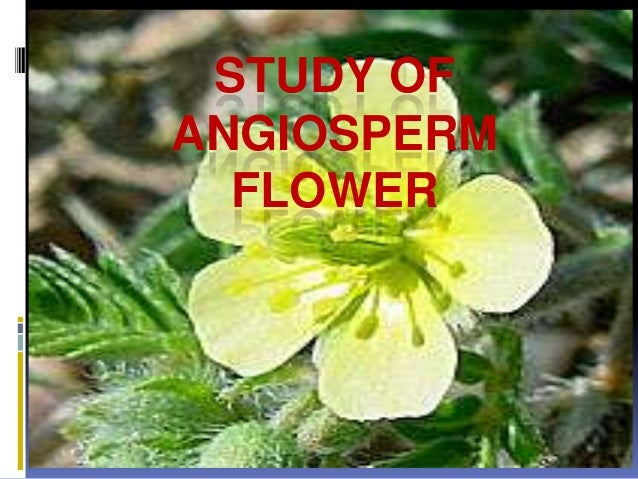 Study of angiosperm flower