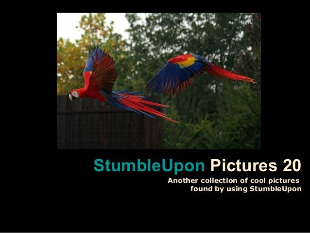 StumbleUponStumbleUpon Pictures 20 Another collection of cool pictures found by using StumbleUpon