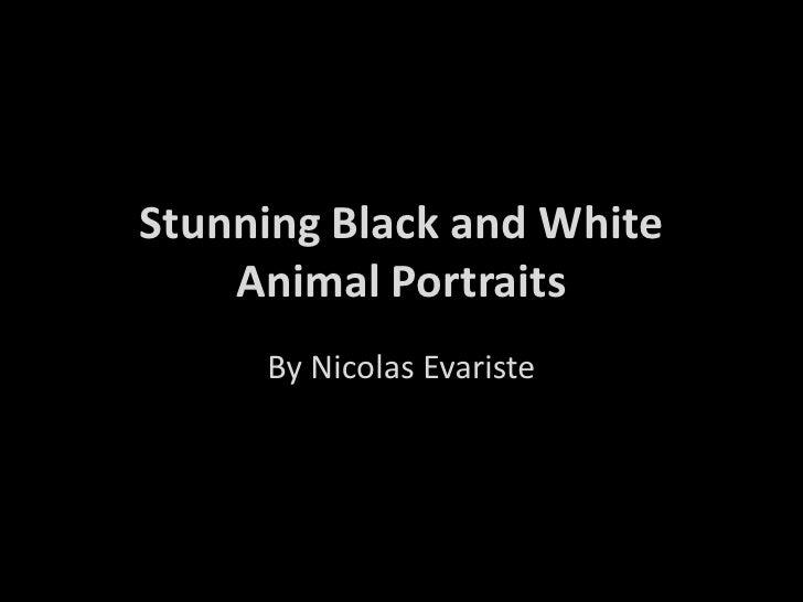 Stunning black and white animal portraits