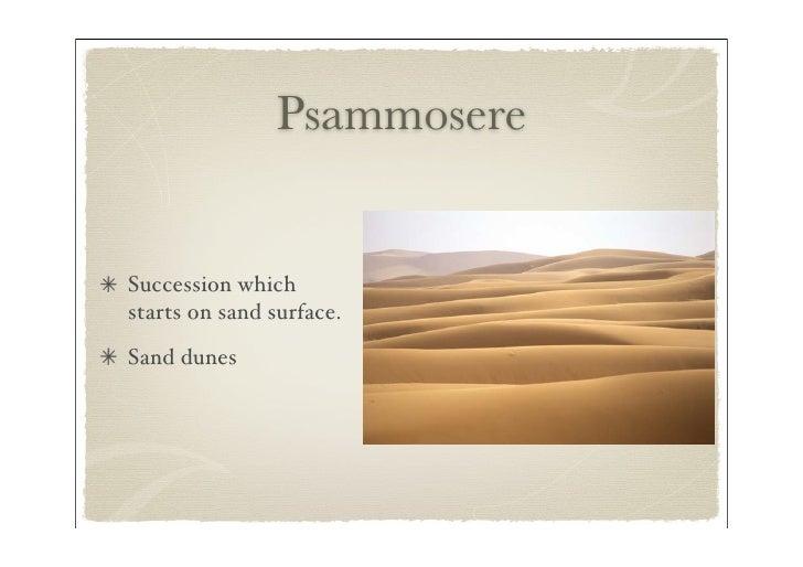 ecosystem succession essay