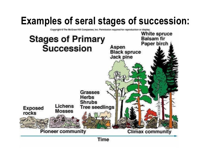 primary and secondary succession essay