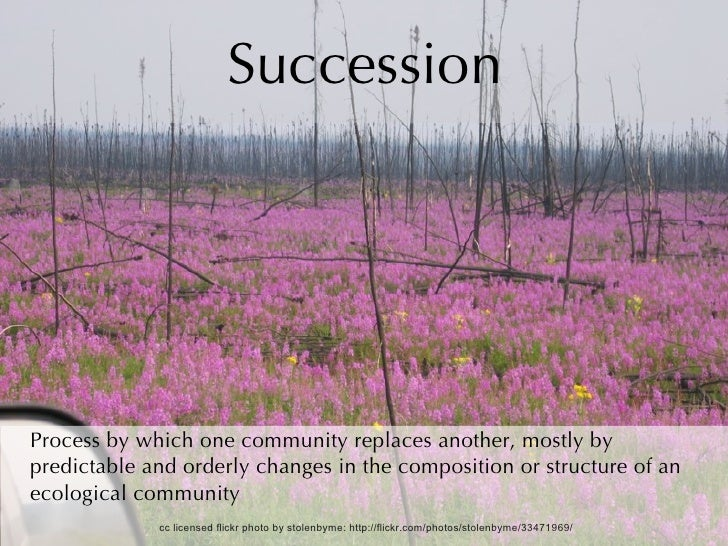 Succession Process by which one community replaces another, mostly by predictable and orderly changes in the composition o...
