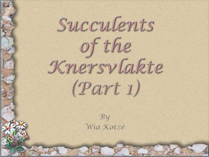 Succulentsof theKnersvlakte(Part 1)<br />By<br />Wia Kotzé<br />