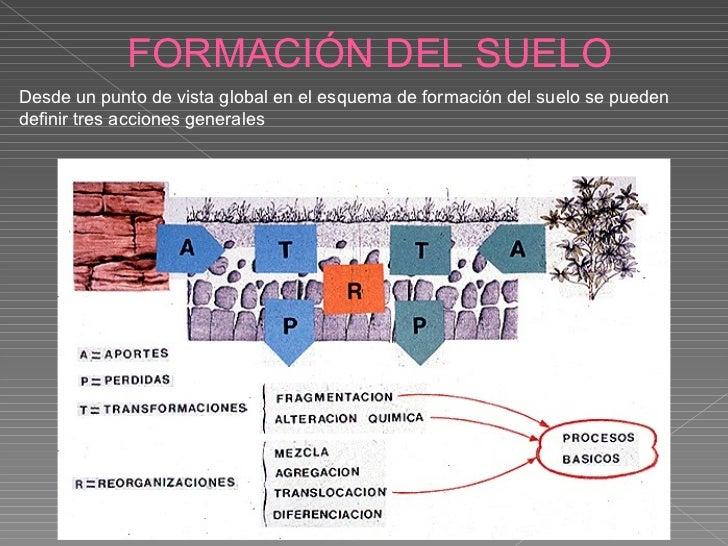 Suelo ppt for Proceso de formacion del suelo