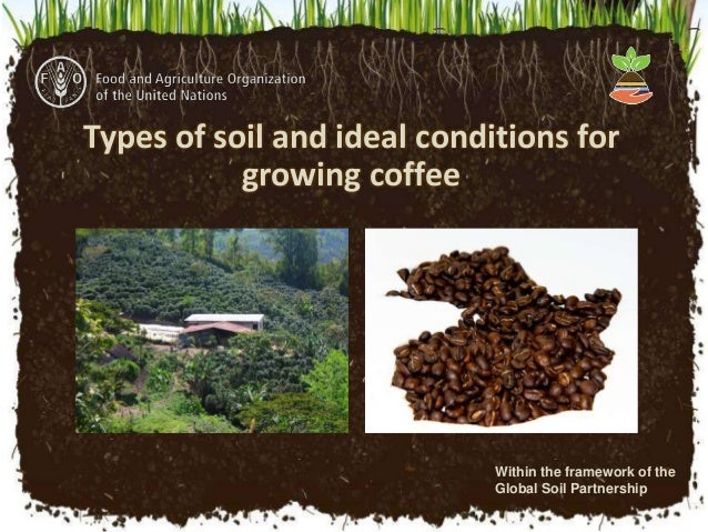 Types of soil and ideal conditions for growing coffee for Different types of soil and their uses