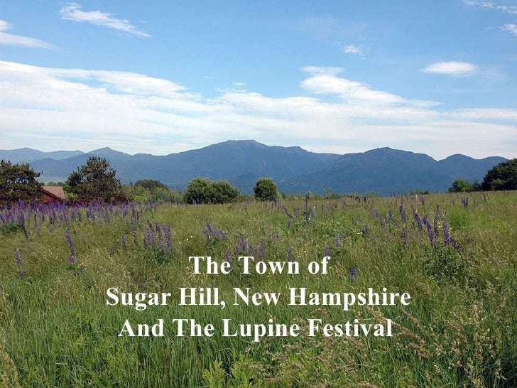 Sugar Hill New Hampshire Lupine Festival   The Town of Sugar Hill, New Hampshire And The Lupine Festival