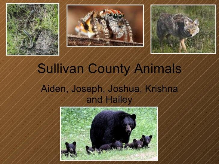 Sullivan County Animals Aiden, Joseph, Joshua, Krishna and Hailey