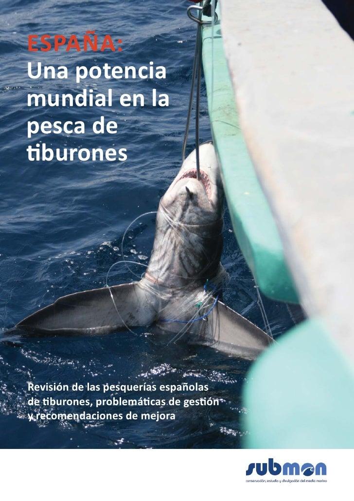 España: una potencia mundial en la pesca de tiburones