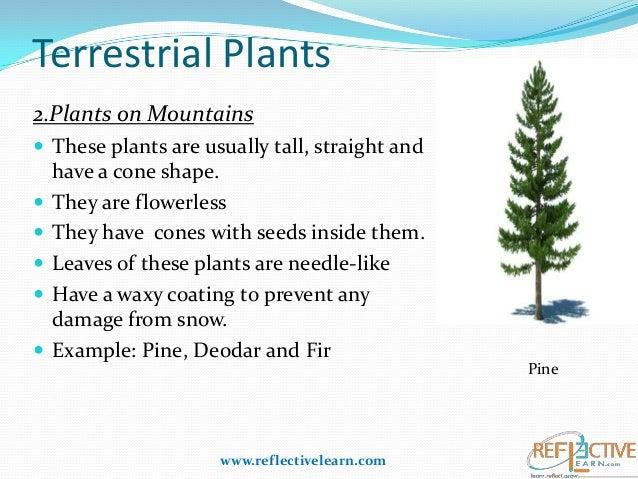 Terrestrial Plants Exa...