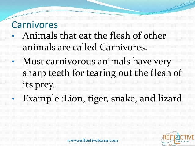 animal adaptation definition - photo #8