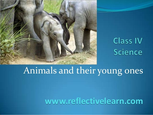 Animals and their young ones www.reflectivelearn.com