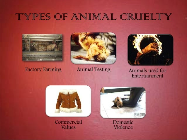 the different perspectives of people on animals and animal rights Such as that we should not kill animals for food or other uses, and that   argument against animal cruelty ignores various pleasures that humans may get   raised against a utilitarian approach from an animal welfare perspective  clearly, there.