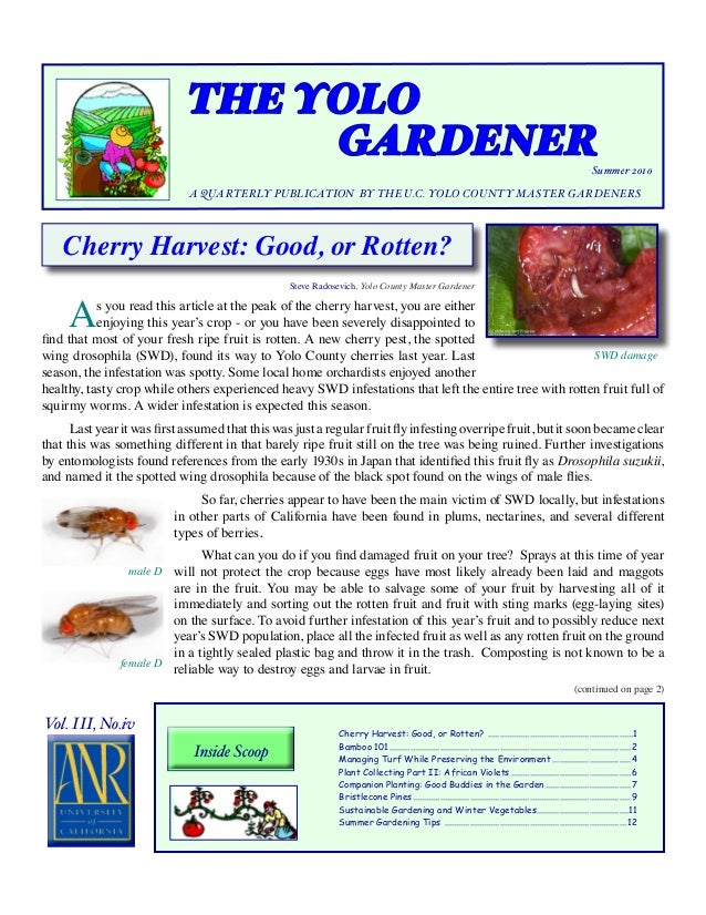 The Yolo Gardener - Companion Planting: Good Buddies in the Garden - Yolo County Master Gardeners