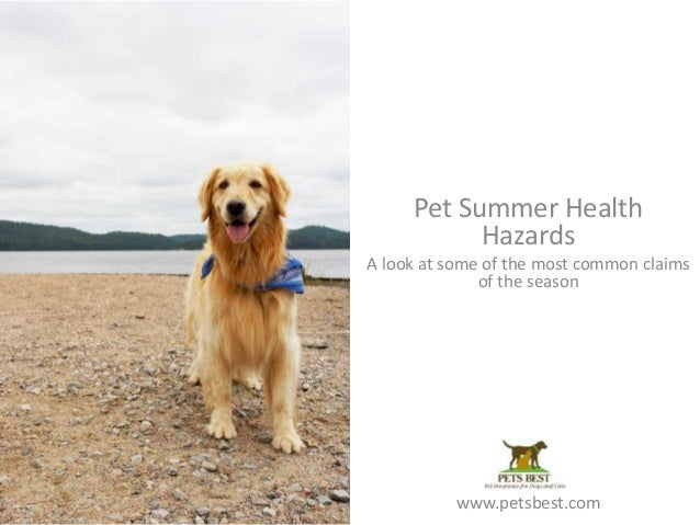 Pet Summer Health Hazards A look at some of the most common claims of the season www.petsbest.com