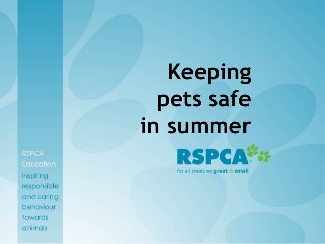 Summertime & Your Pets