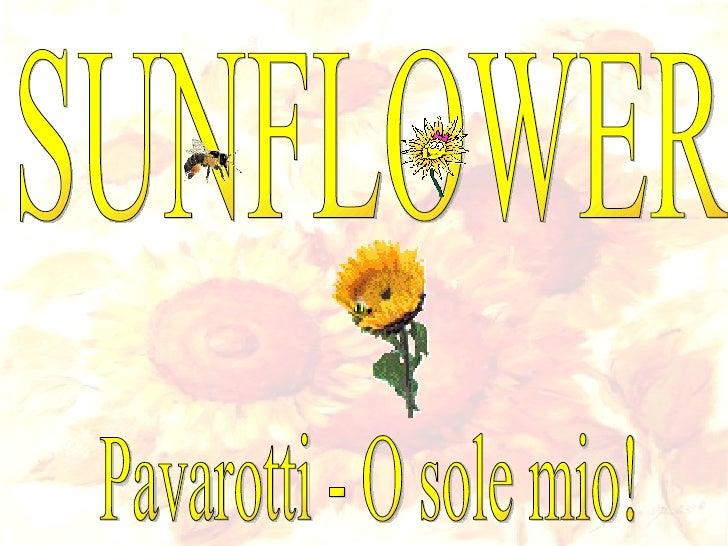 SUNFLOWER Pavarotti - O sole mio!