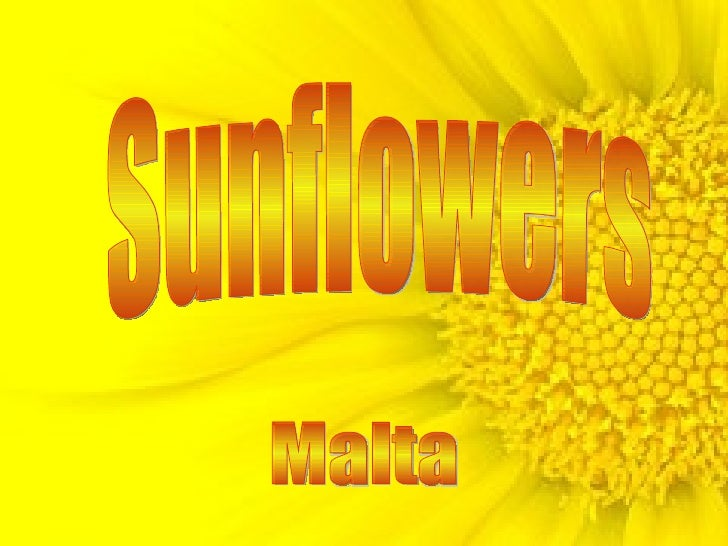 Sunflowers Malta