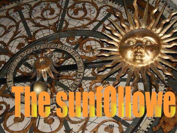 The sunfOllower