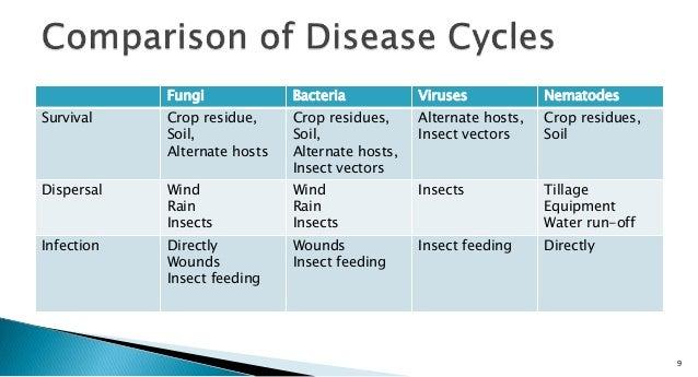Microorganisms Essays