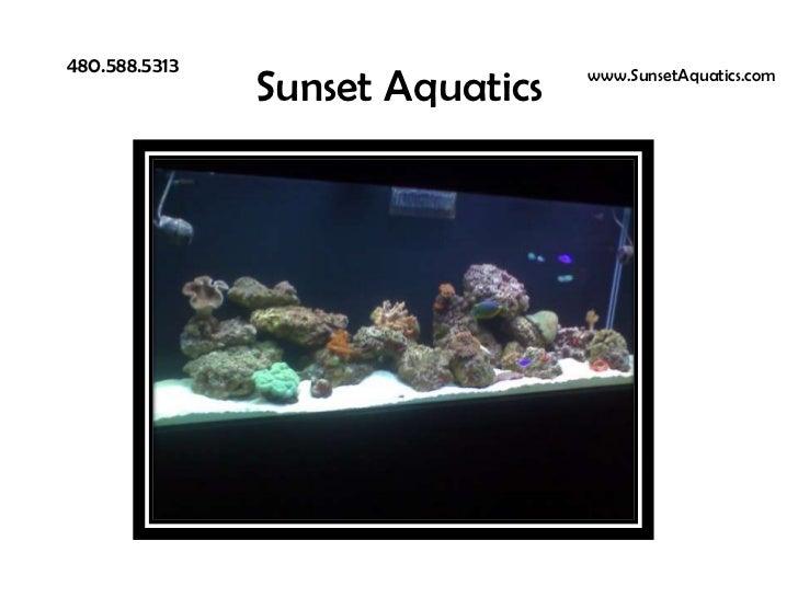 Sunset Aquatics<br />480.588.5313<br />www.SunsetAquatics.com<br />