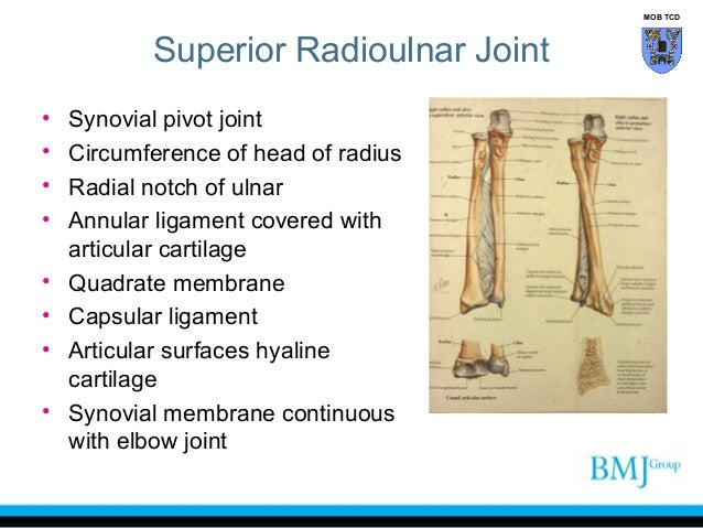 Rotation Anatomy Anatomy of Superior an...