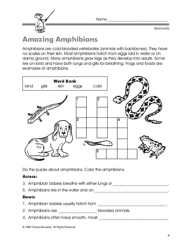 Amphibians and Reptiles  Worksheet  Educationcom