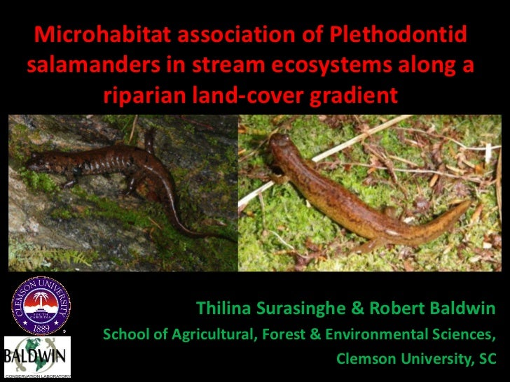 Microhabitat association of Plethodontidsalamanders in stream ecosystems along a       riparian land-cover gradient       ...