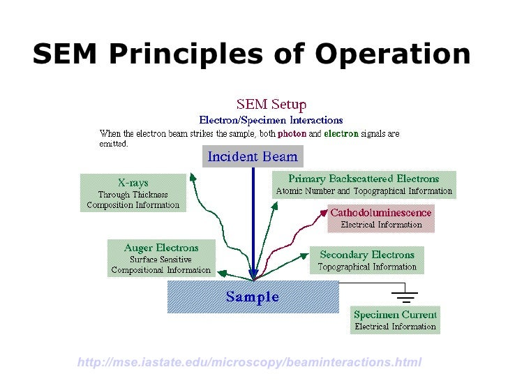 working principle of scanning electron microscope pdf