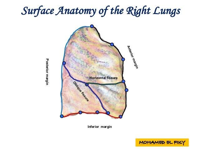 Heart surface anatomy