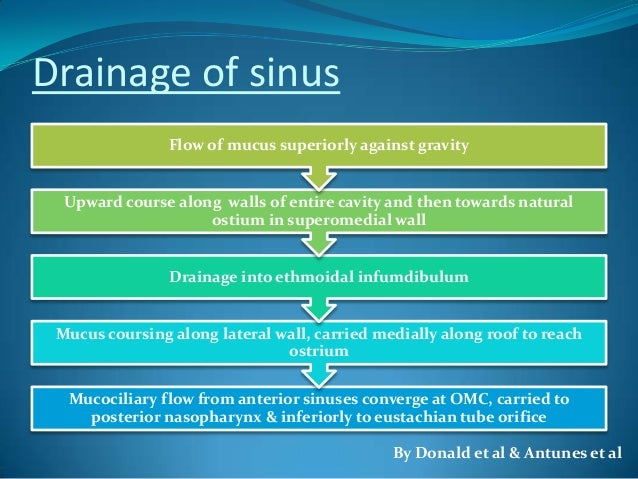 Anatomy of sinus drainage