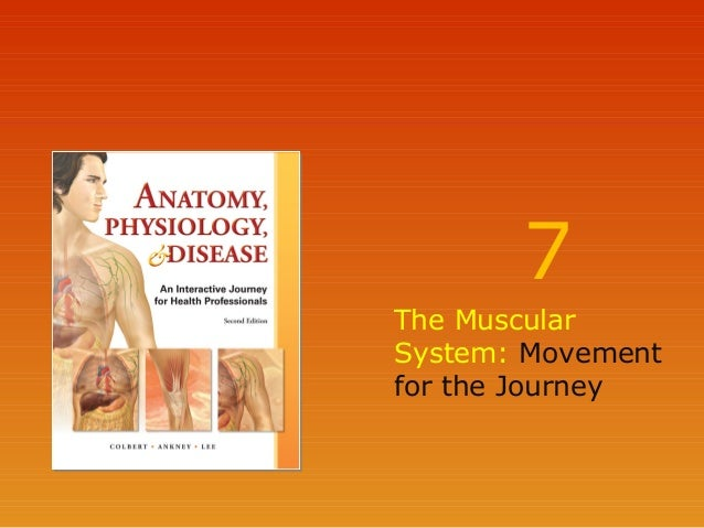 7 The Muscular System: Movement for the Journey