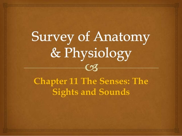 Chapter 11 The Senses: The Sights and Sounds