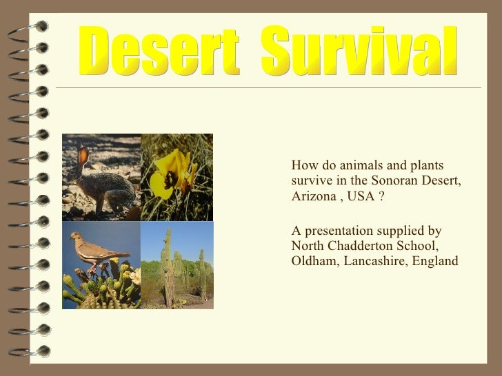 <ul><li>How do animals and plants survive in the Sonoran Desert, Arizona , USA ? </li></ul><ul><li>A presentation supplied...