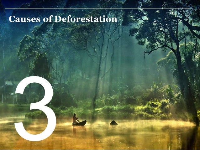 ten main points of deforestation Deforestation, the permanent destruction of forests in order to make the land available for other uses, is considered to be a contributing factor to global climate change  daley points out.