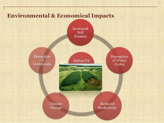 What environmental problems does paper cause?