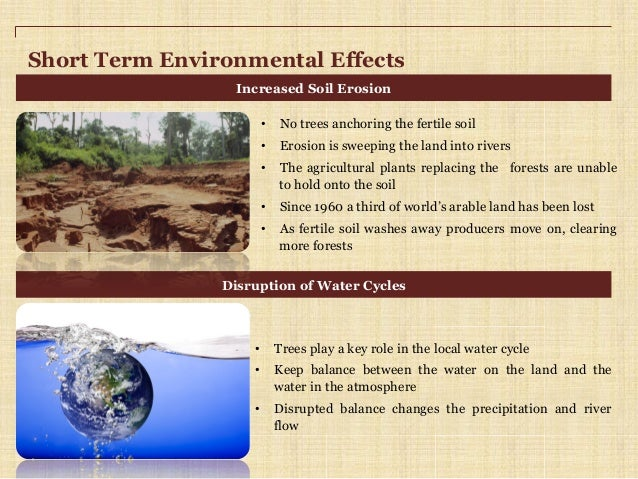 Environment expository essay