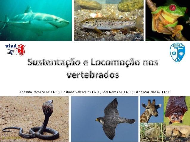 Ana Rita Pacheco nº 33715, Cristiana Valente nº33708, Joel Neves nº 33709, Filipe Marinho nº 33706