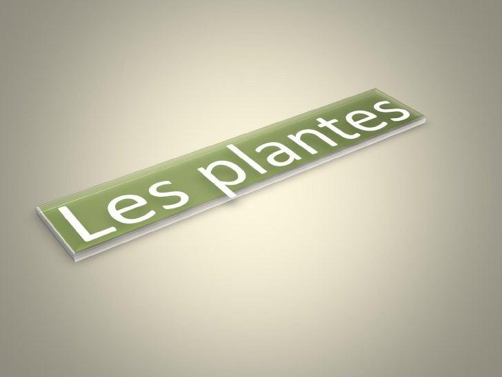 • Lesplantes sontdesêtresmulticellulairesàlabase  delachaînealimentaire.• Ellesformentlunedessubdivisions...