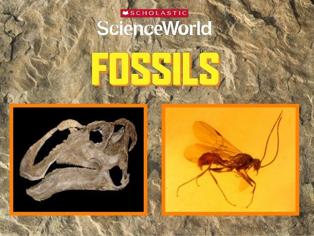 Science World Fossils