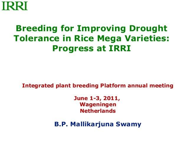 Breeding for Improving DroughtTolerance in Rice Mega Varieties:        Progress at IRRI Integrated plant breeding Platform...